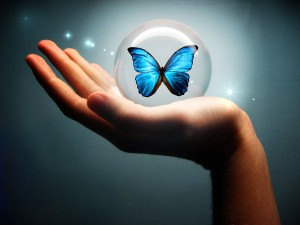 blue_butterfly_comfortzone